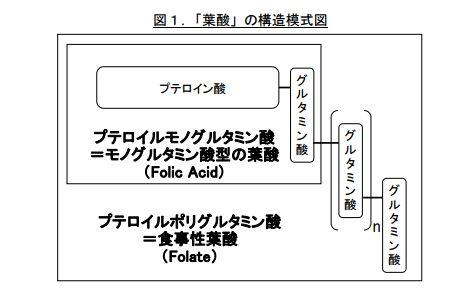 「葉酸」の構造模式図